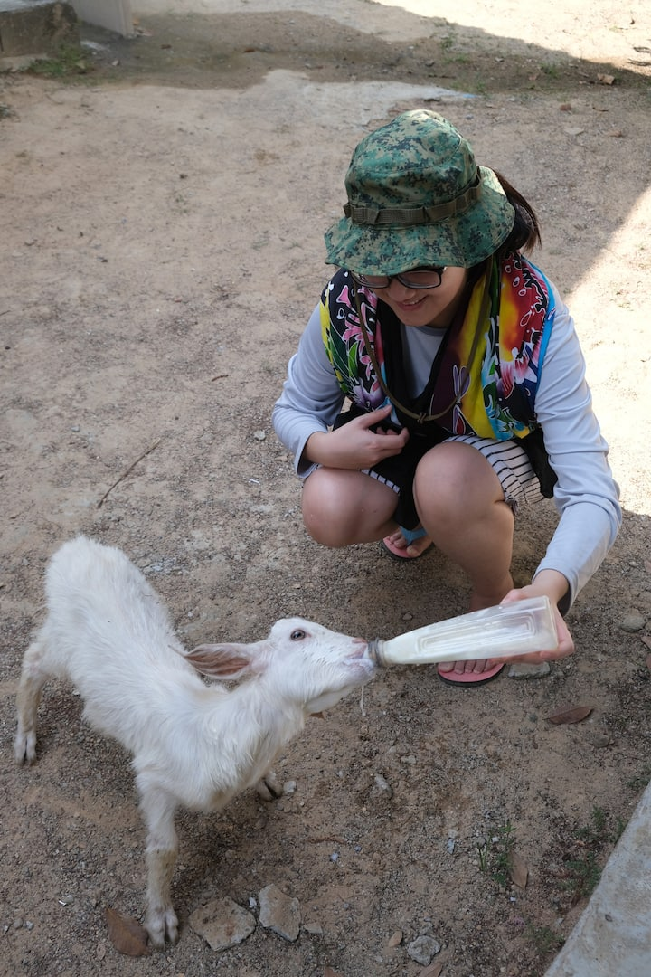 Feeding Milk to Milo the Goat