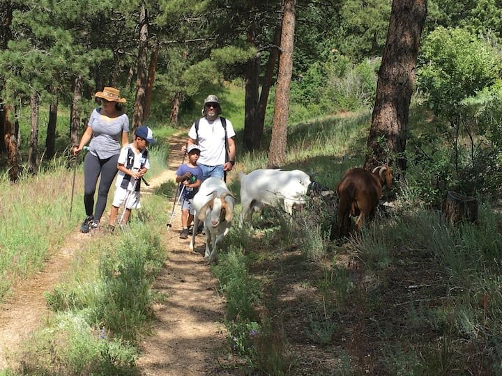 Family & goat friends on the trail.