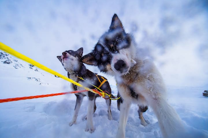 Happy dogs playing in the fresh snow