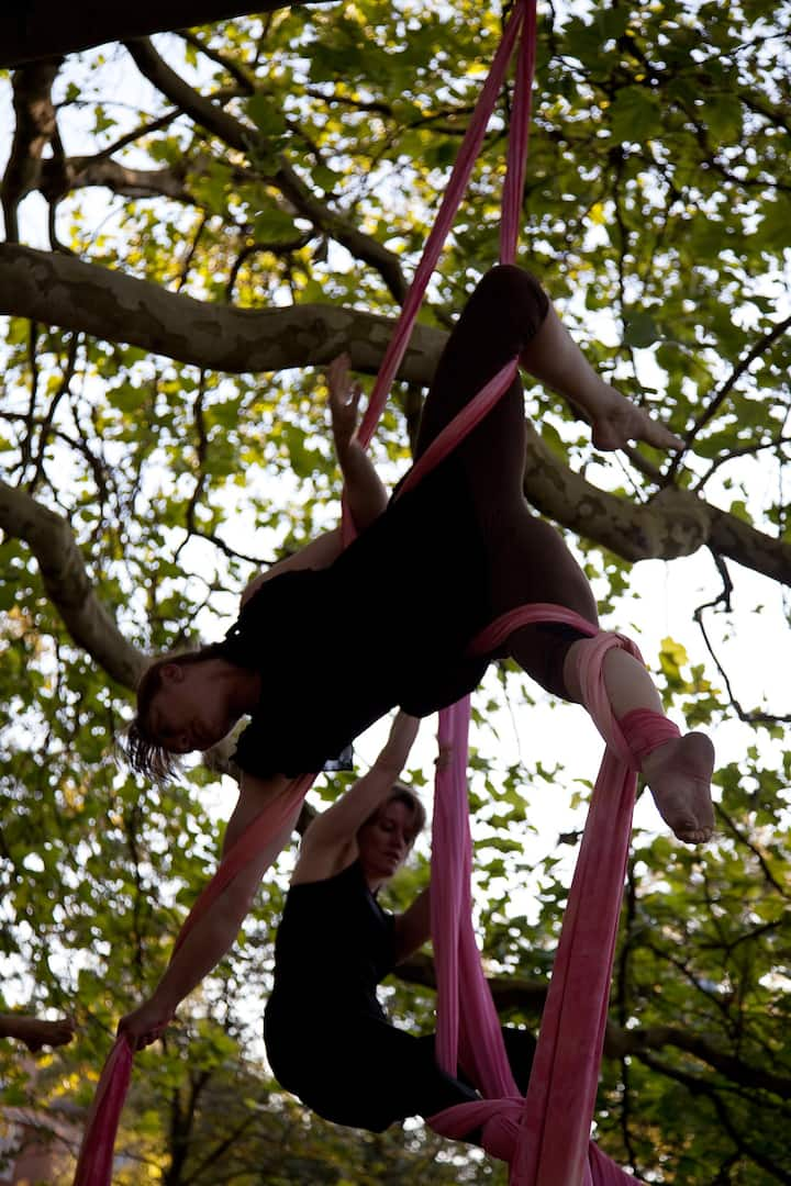 Silks in trees outdoors during summer