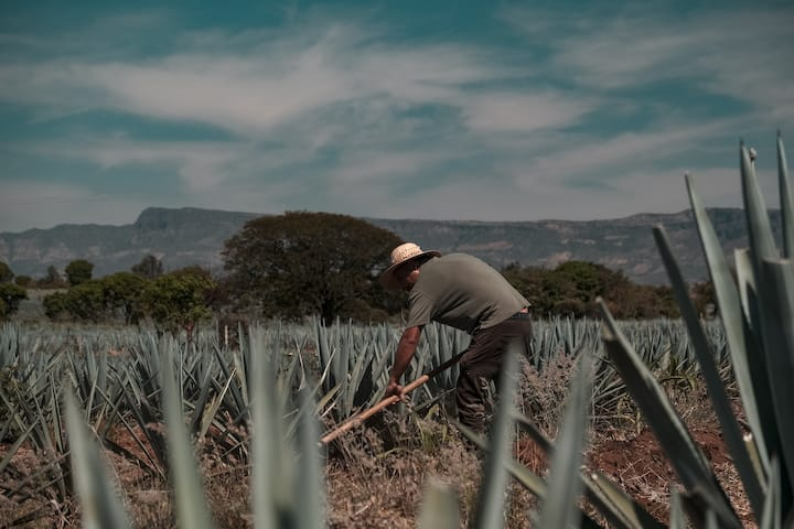 Experience the passion behind tequila