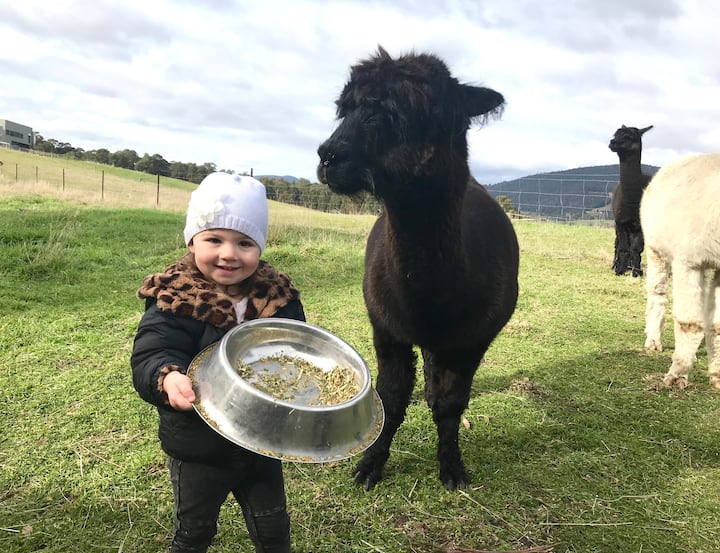 Feed the friendly alpacas