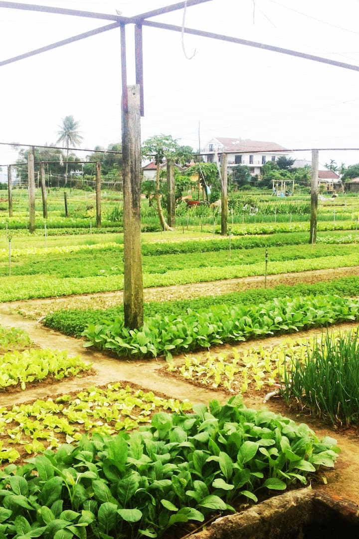 Green Vegetable Gardens