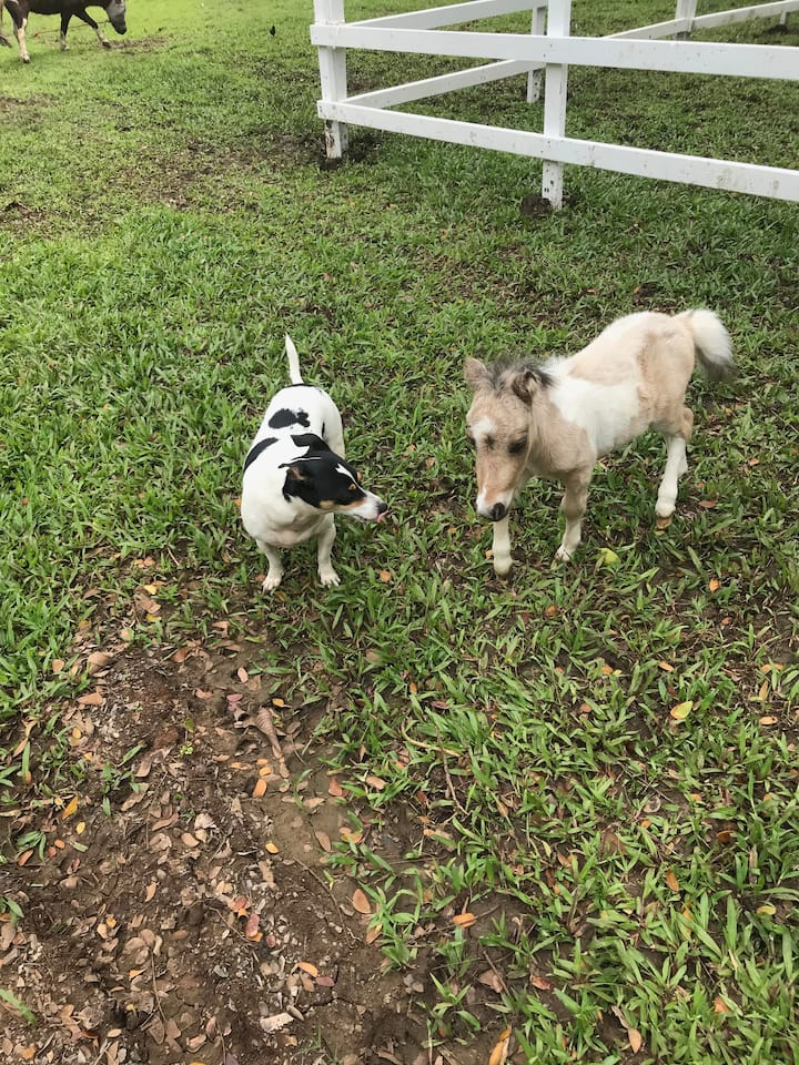 Yes this baby mini horse is super small!