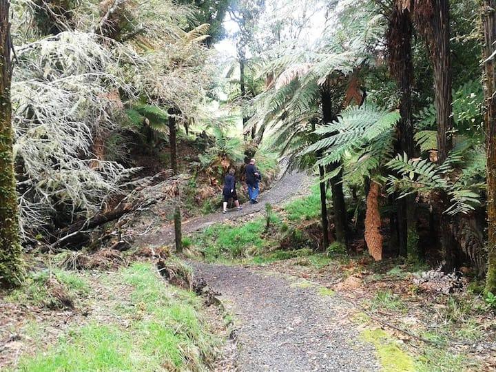 Easy grade 2km walk to the waterfalls