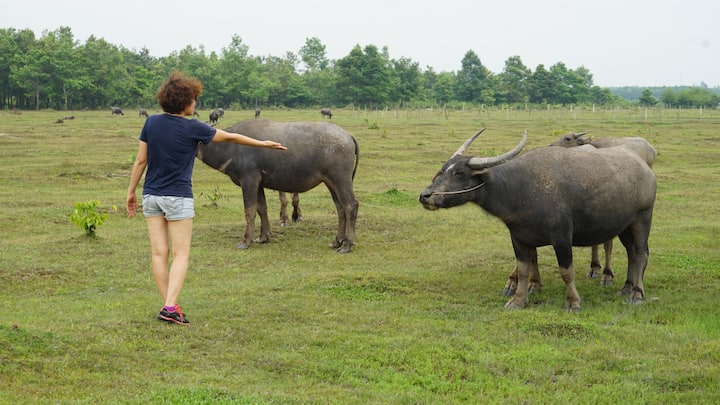 Get along well with water buffalo