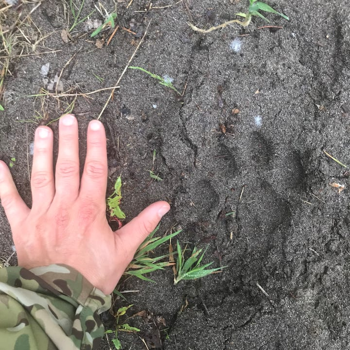 My hand up against a female cougar track