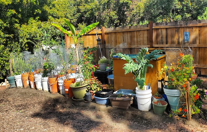 A section of the Learn & Grow test garden