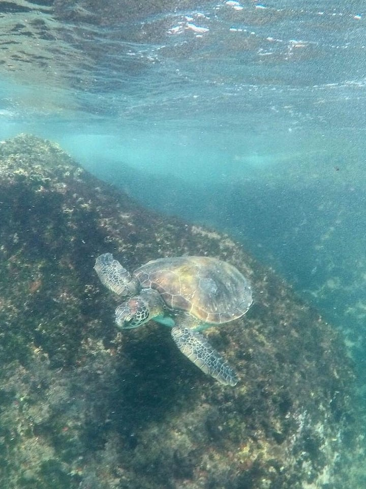 The welcoming and friendly turtles.