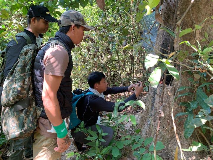 Jungle Interaction