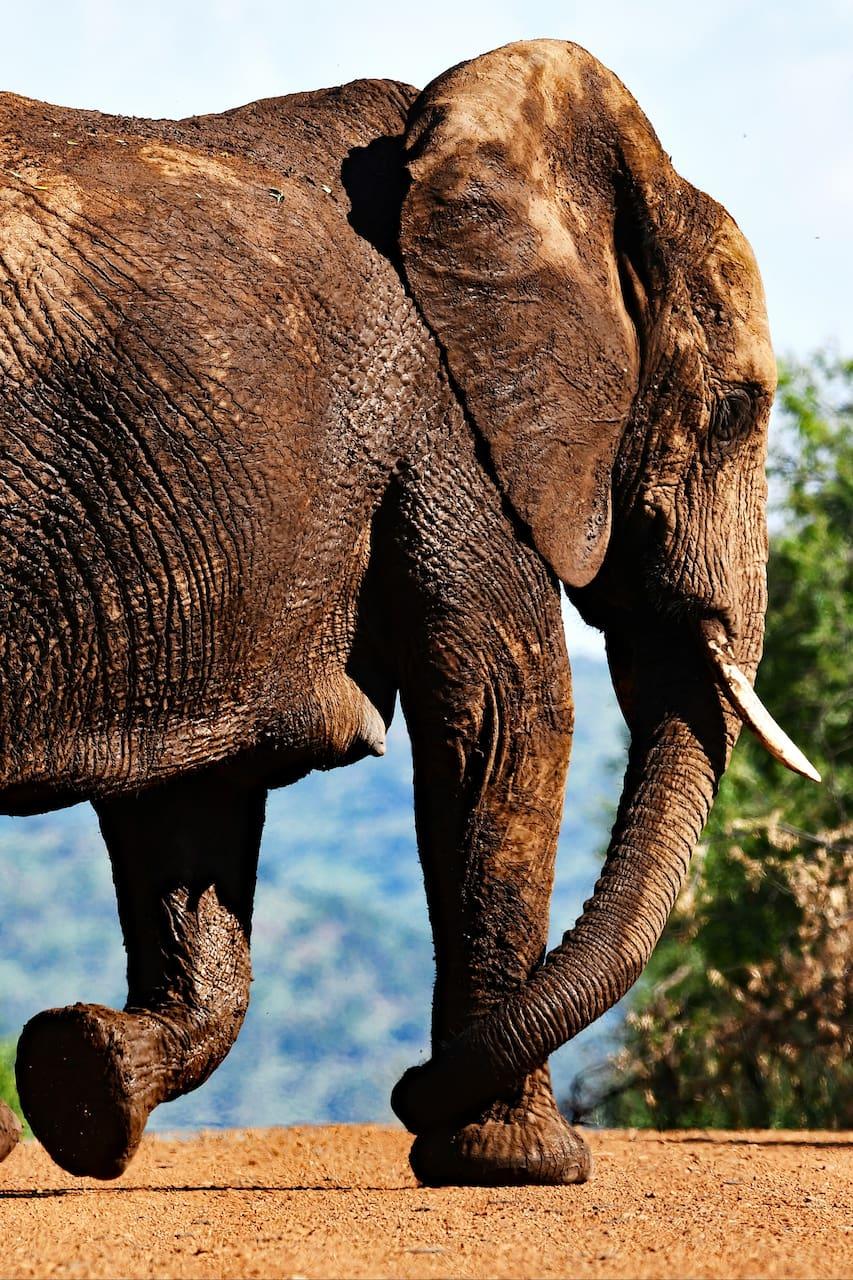 Animaux Sauvages Safari Africain A Pilanesberg Airbnb