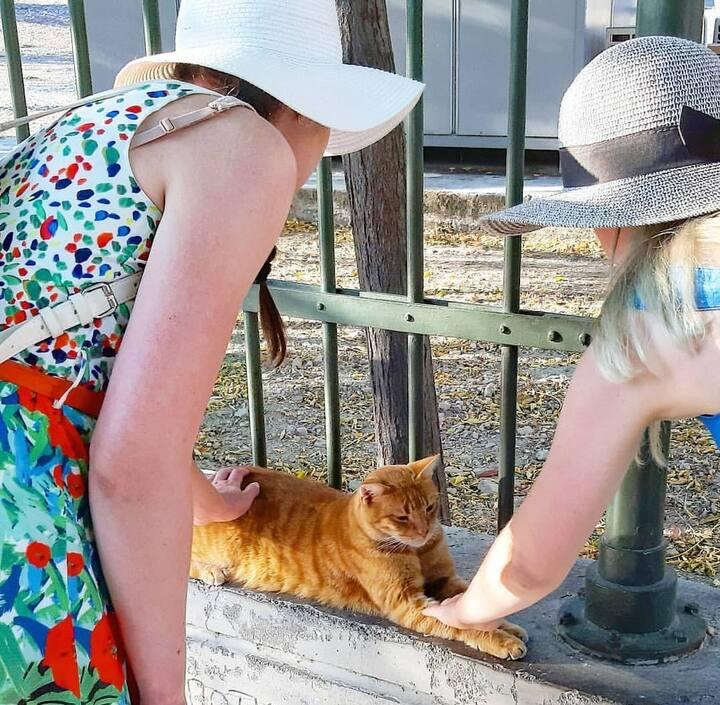 Во время экскурсии можно  гладить котиков