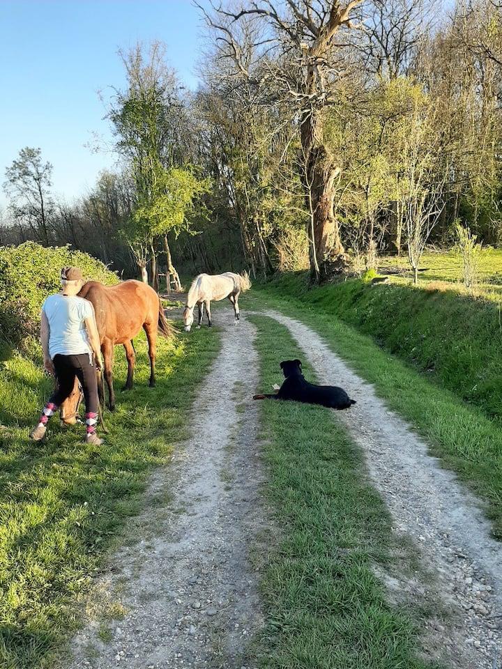 Les chevaux sortent du pré