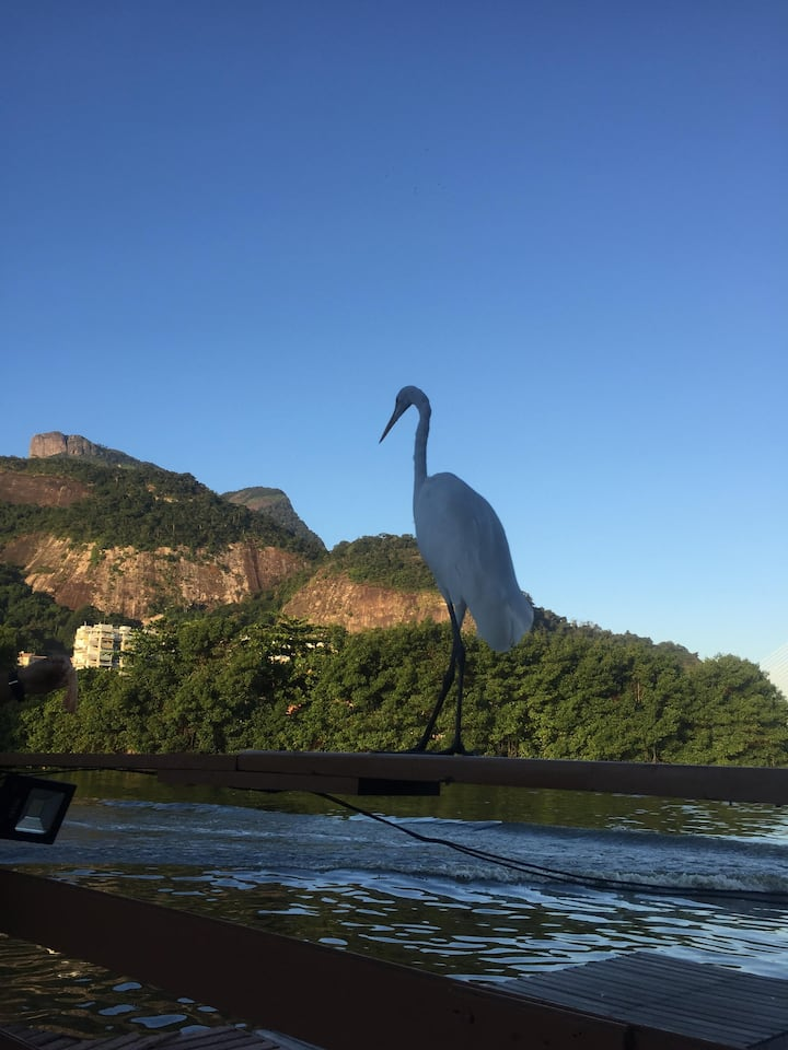Birds of Rio