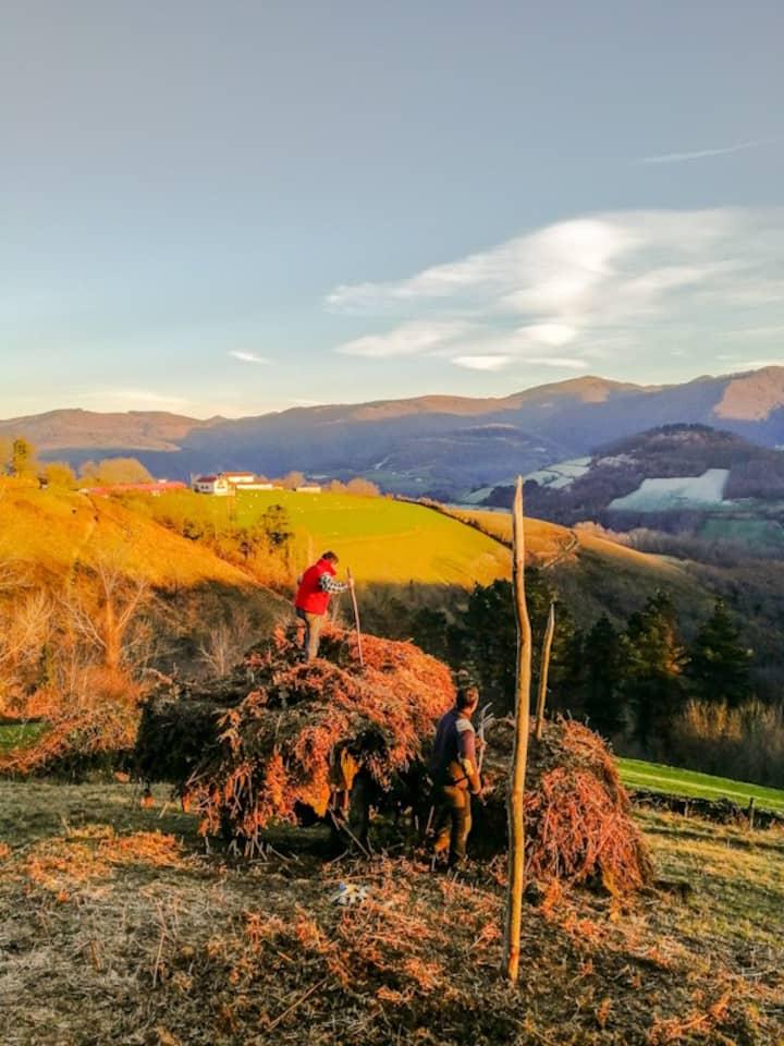 Medieval Farming Landscapes
