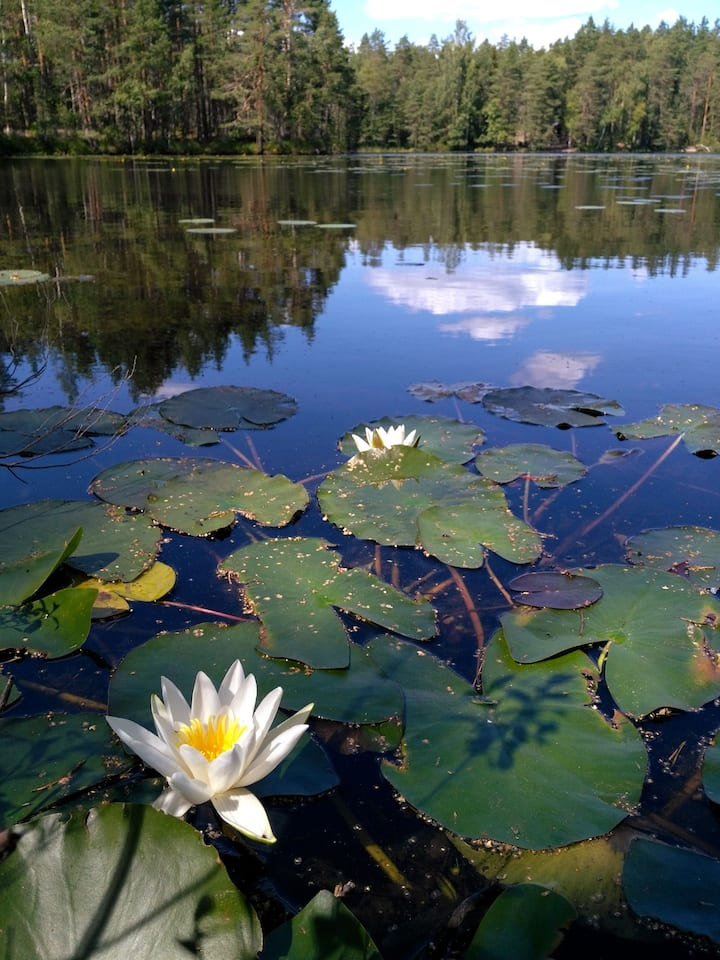 Beautiful Water flower in Nuuksio