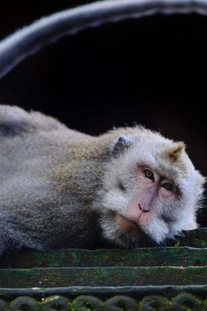 Uluwatu monkey forrest