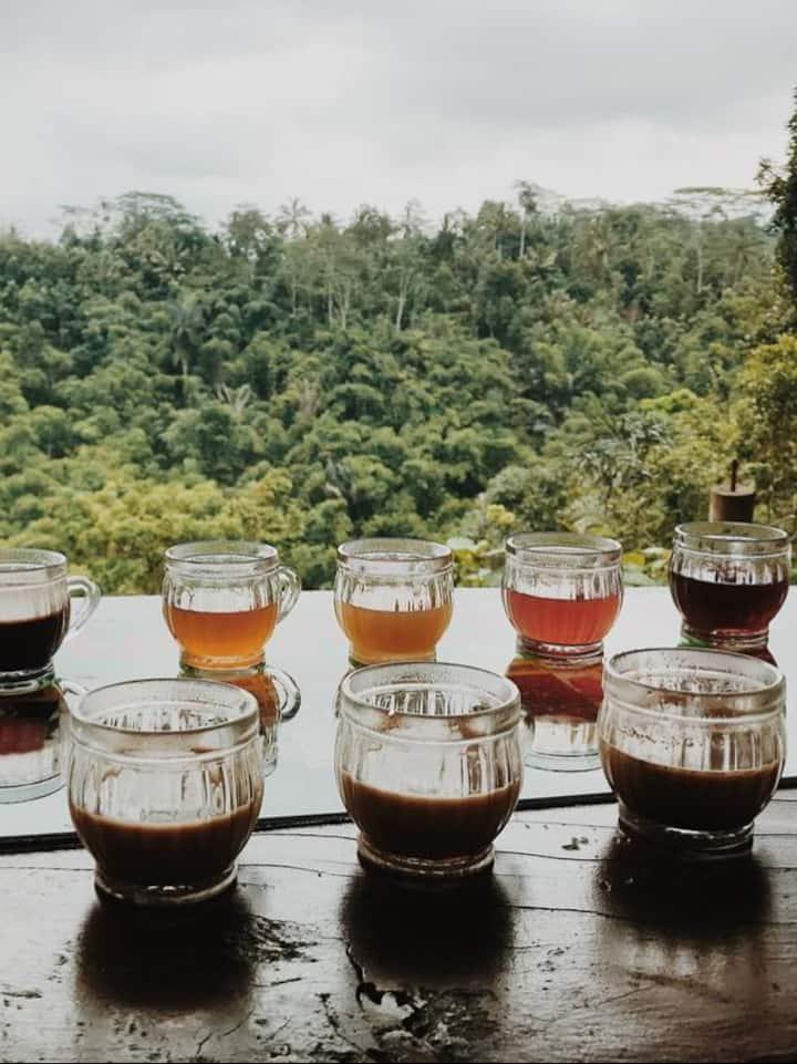 Trying best coffee in Bali Luwak plant