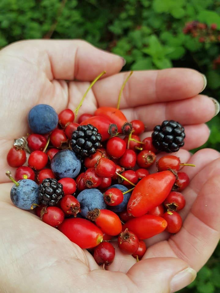 Learn a little hedgerow folklore