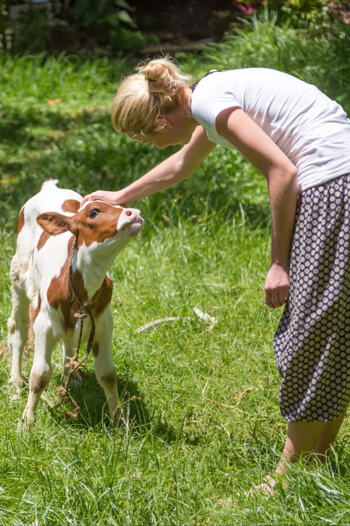 Meet the local farm animals