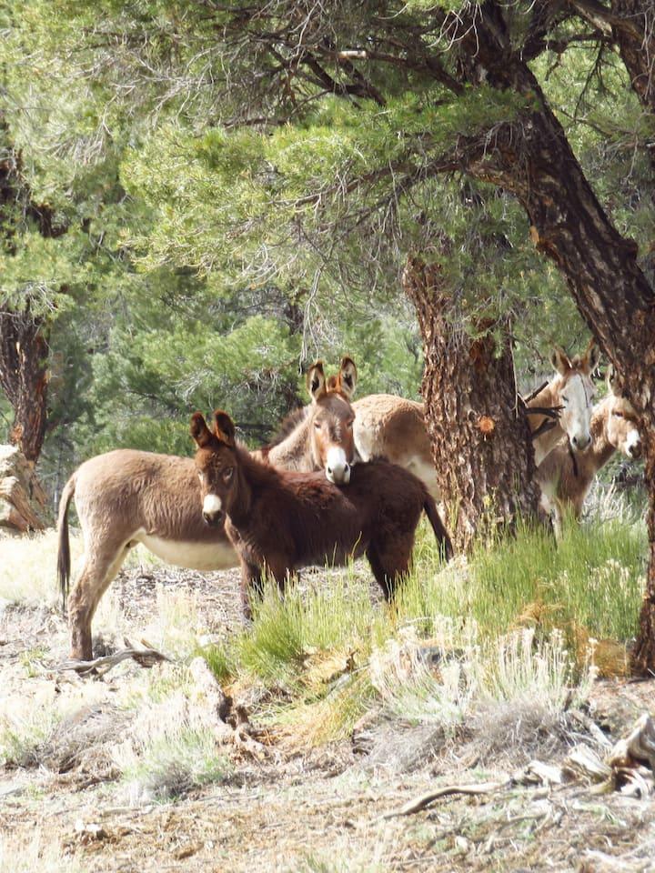 Baby burro trailside