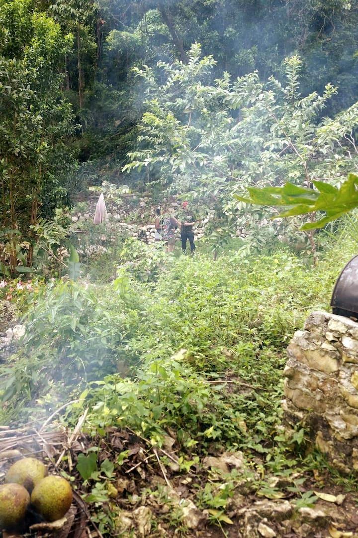 The Garden where we roast breadfruit