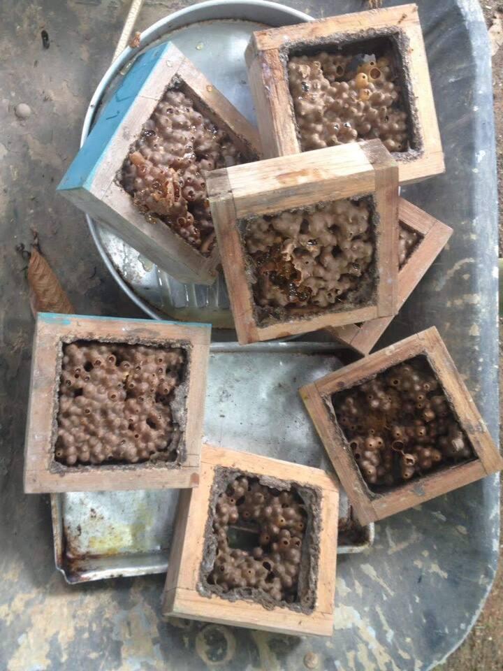 Colheita de mel