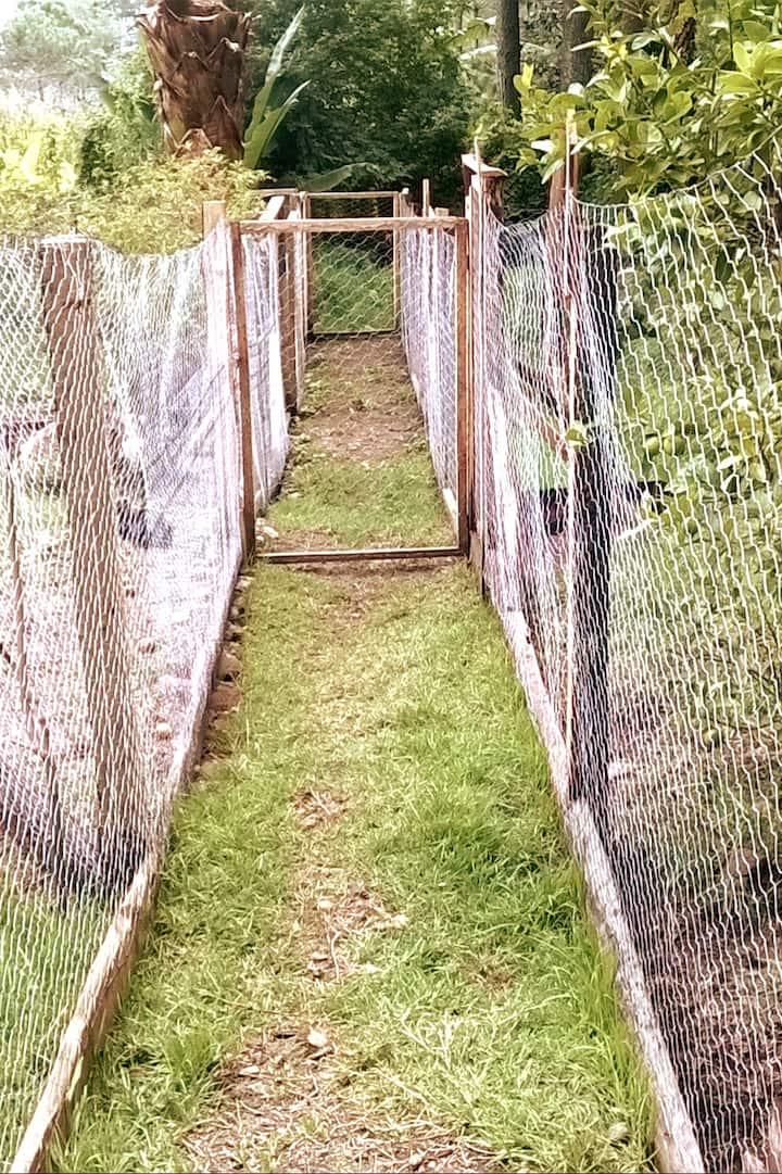 Caminos para pastoreo rotativo de pollos