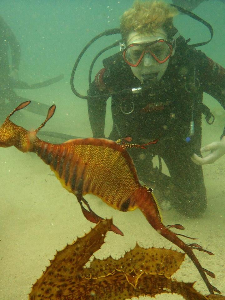 Family fun with Weedy Sea Dragon