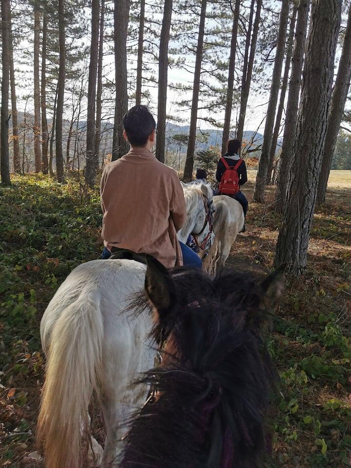 Enjoy in horse ride through National Par