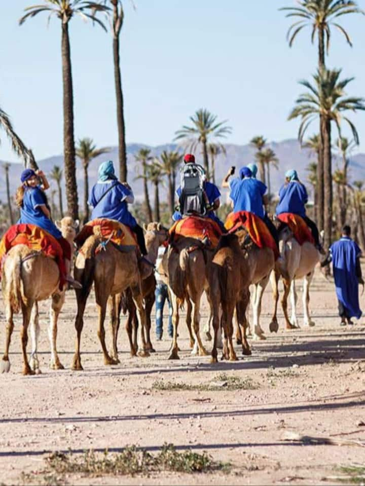 Camel ride on group friends