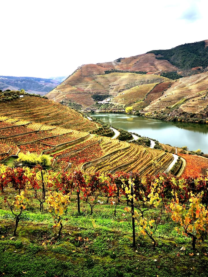 See the views in Douro in the best spots