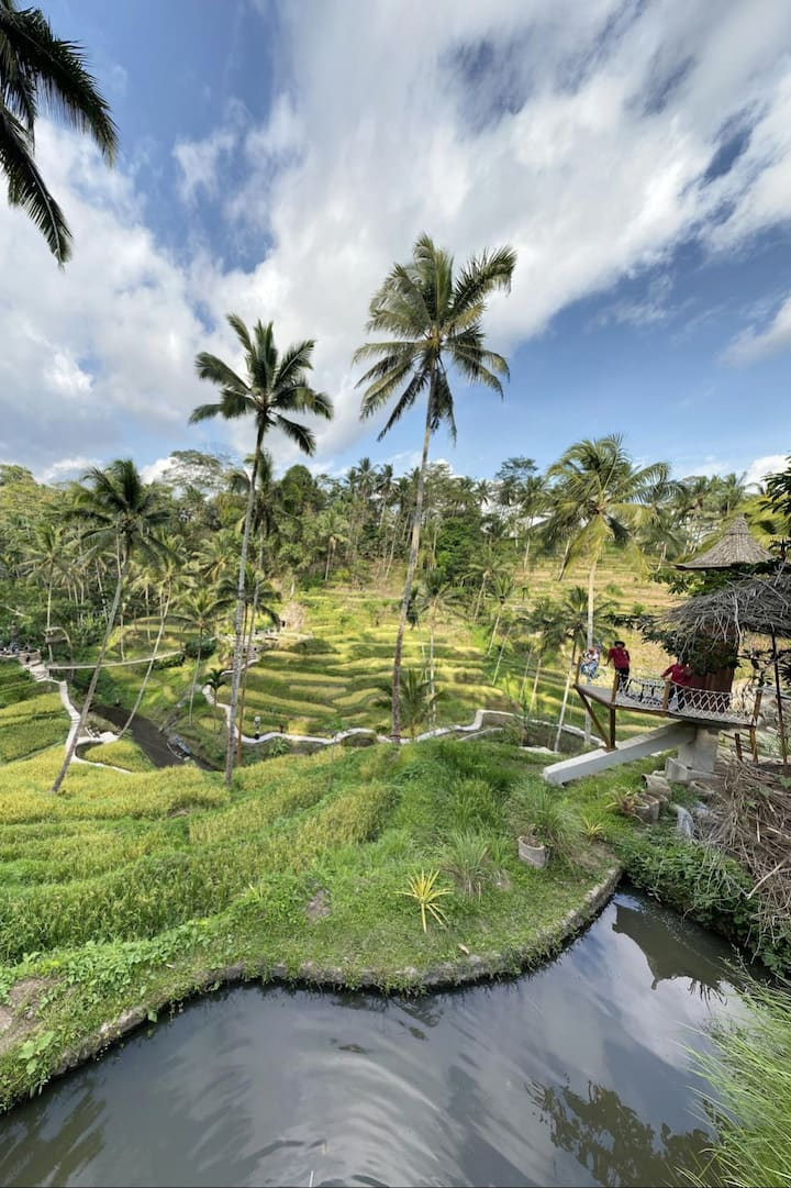 a  stunning view of rice terrace