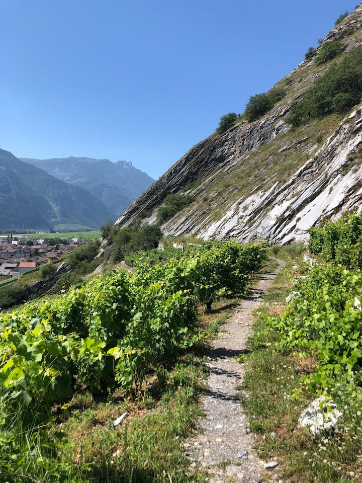 Walk and tour the famous vineyards