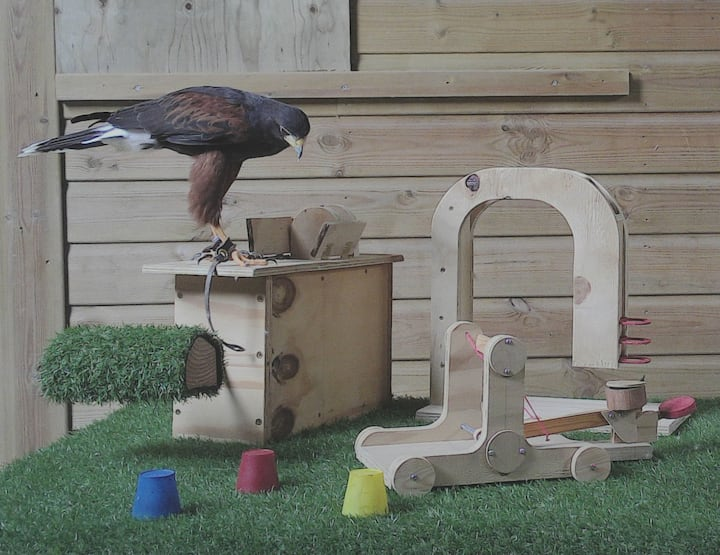 Sam and some of his enrichment toys.