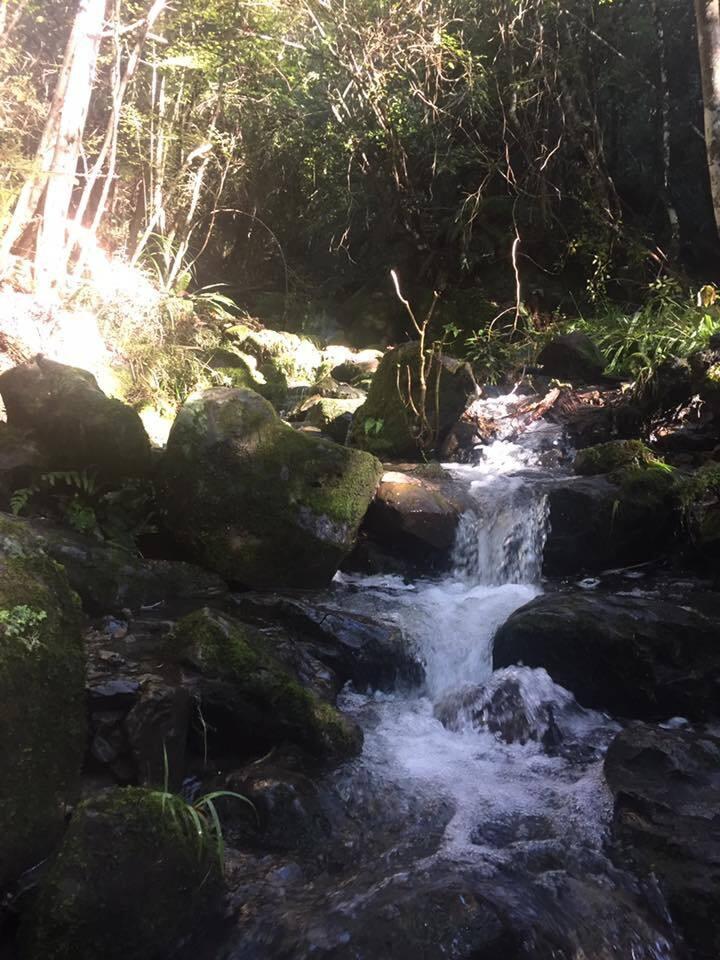 Pristine Drinkable streams