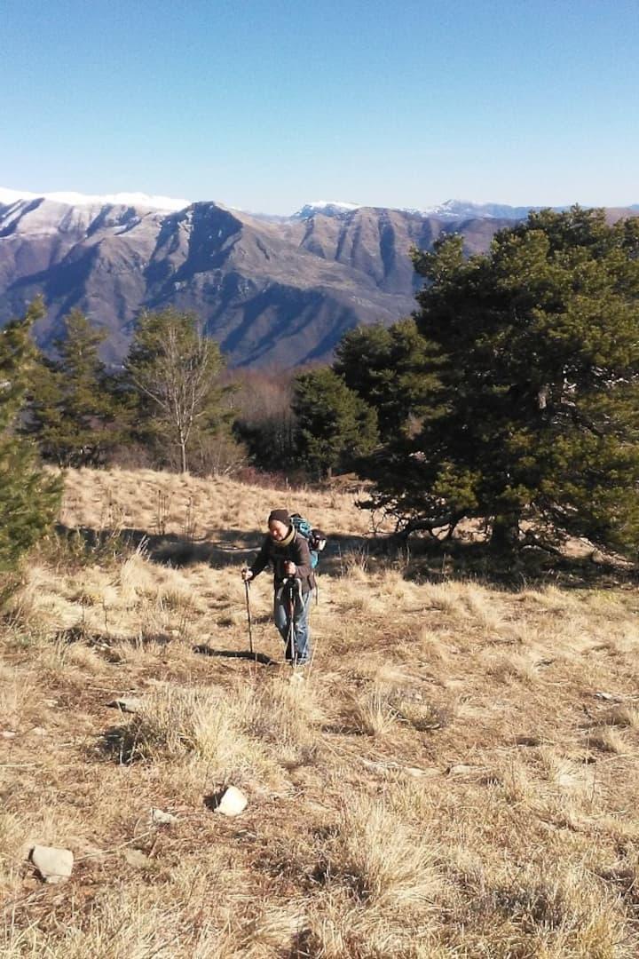 Aus dichtem Wald zum lichten Gipfel