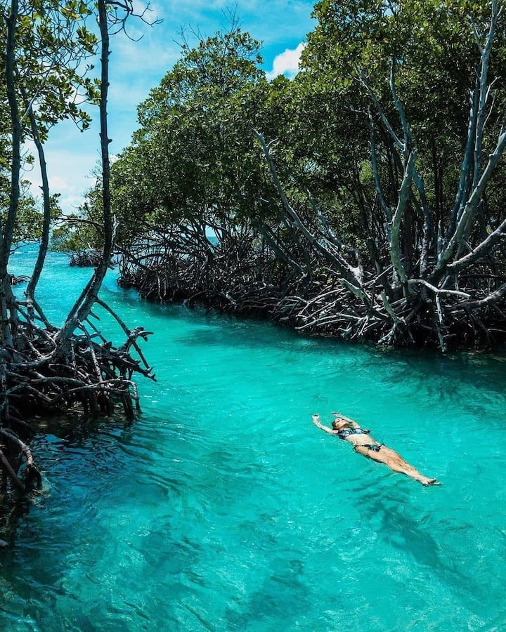 Hang out in the mangrove trails