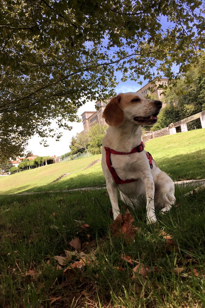 Lola en el parque de Belvís