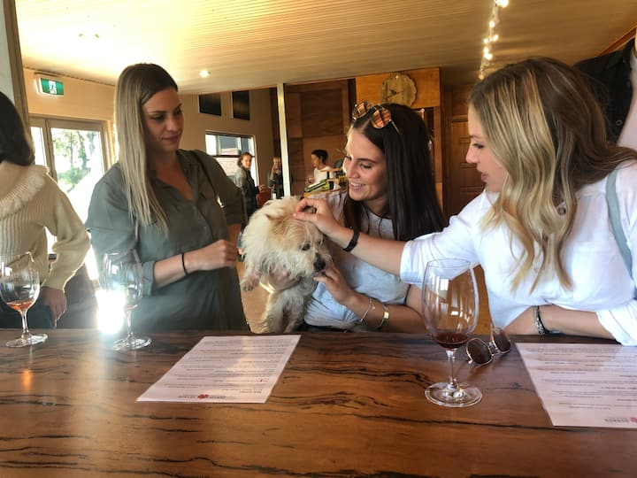 Wine dogs a plenty on a Cheers Tour
