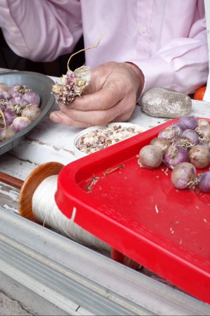 Doug's saved garlic for experiments