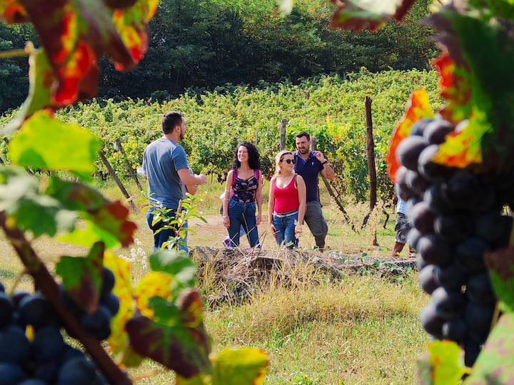 Inside the vineyards in Caluso