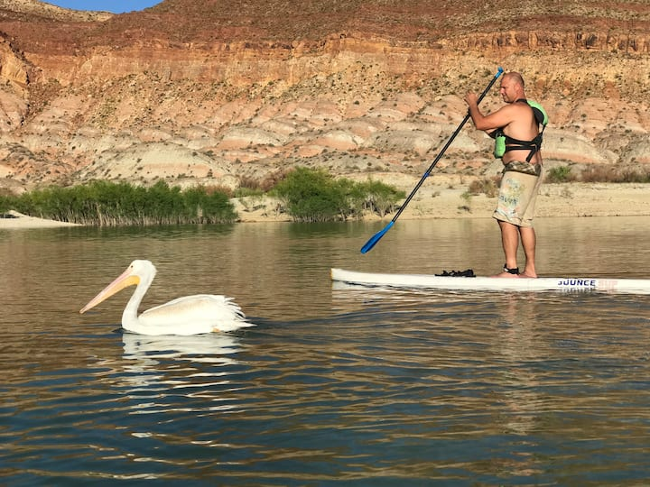 Pelicans can paddle, too.