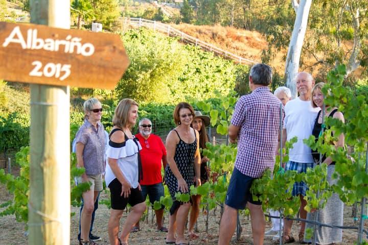 Albarino  vineyard block on the slope