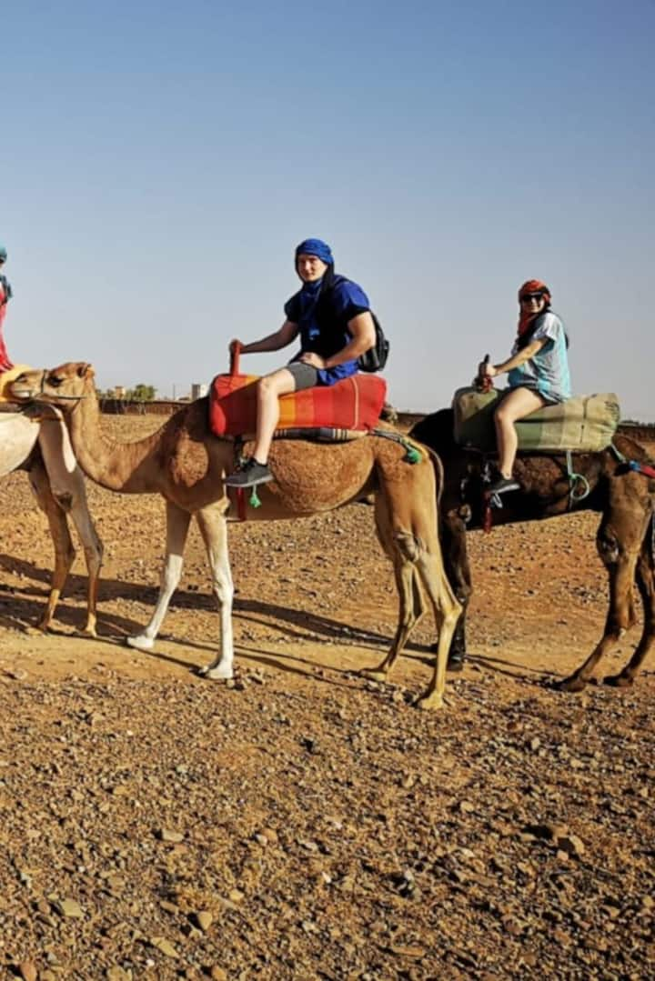 Tour experience camel ride.