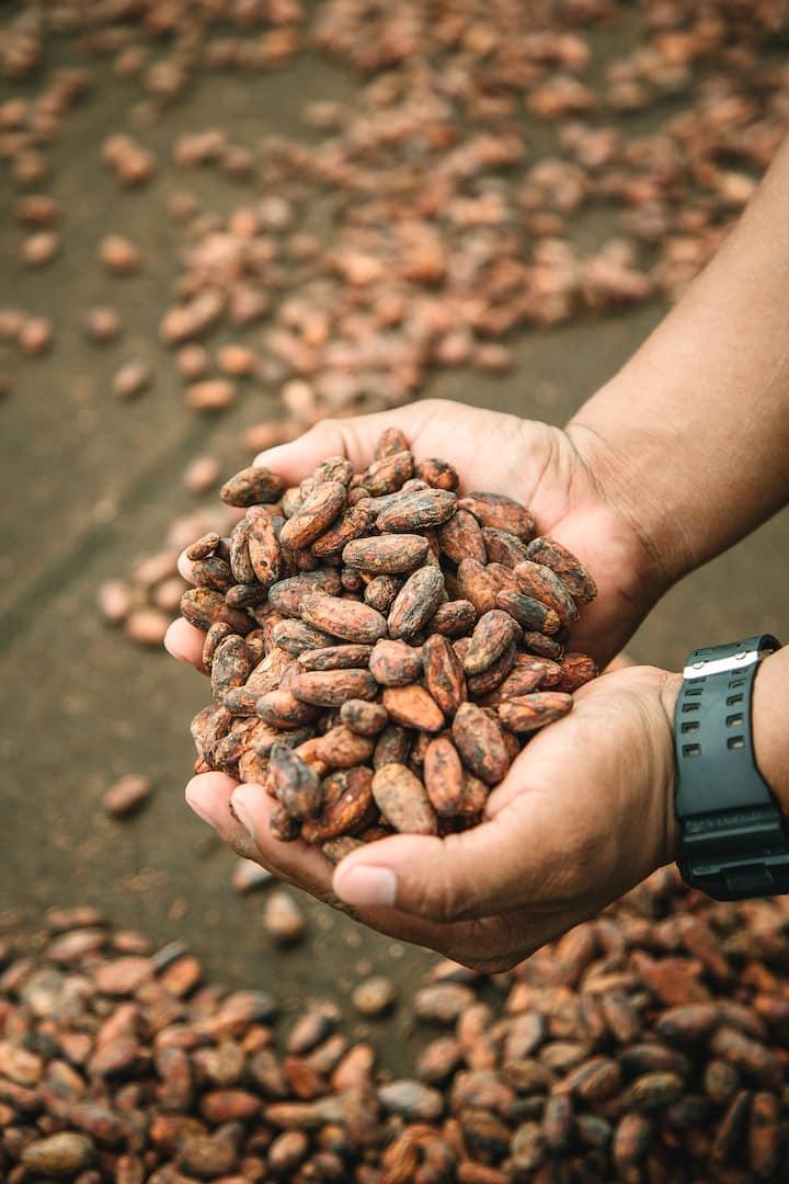 Cocoa beans / Pepas de Cacao