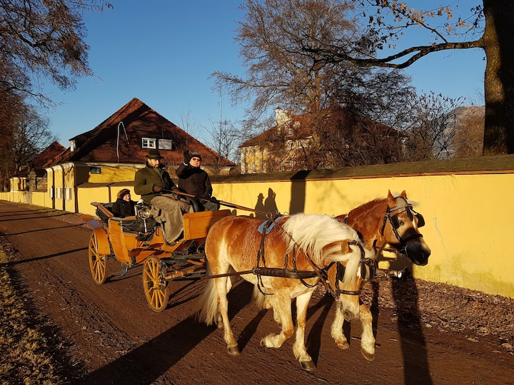 Horse carriage by the Trapp film home