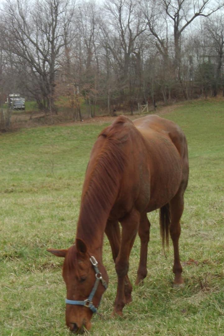 Horse Barn & Pasture