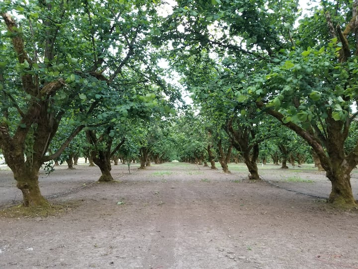 The established orchard ready for Fall.