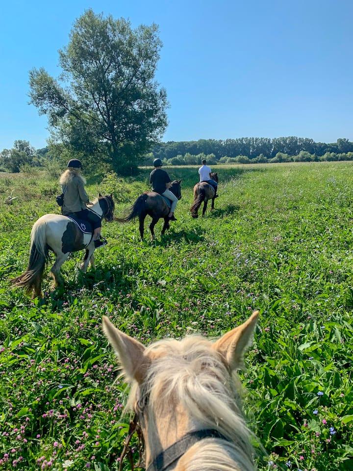Horseback riding in the wild!